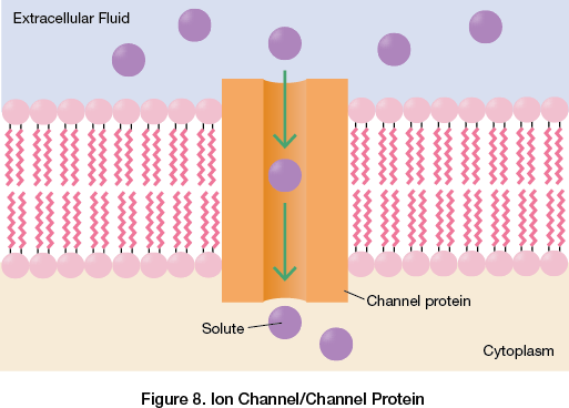 Ion Channel/Channel Protein