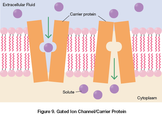 Gated Ion Channel/Carrier Protein