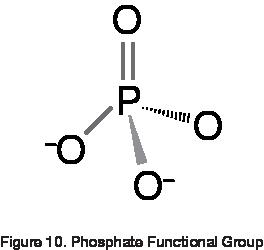 Phosphate Functional Group