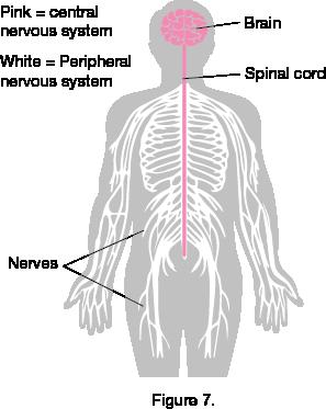 biology ii anatomy and physiology study